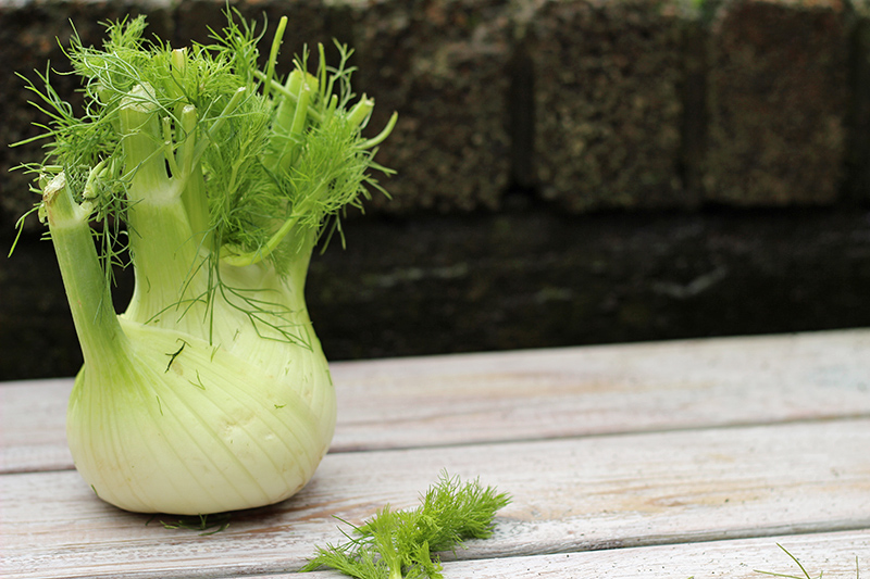 fennel bulb susan jane